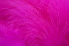 Rose Bird  feathers Stock Photos