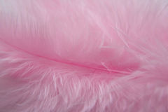 Rose Bird  feathers Royalty Free Stock Photography