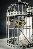Rose in birds cage. Dying rose in birds cage Royalty Free Stock Images
