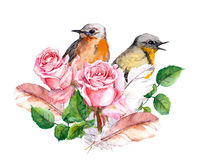 Rose, birds and feathers. Watercolor Stock Image