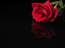 Rose on a black background. Red rose on a black background with reflection Stock Images
