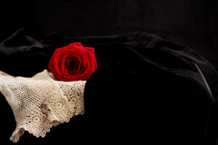 Rose on Black Velvet Stock Image