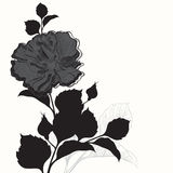 Rose. Black and white greeting card or invitation. Vector illust Stock Images