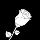 Rose black white Royalty Free Stock Images