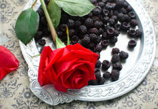 Rose and blackberries Royalty Free Stock Images