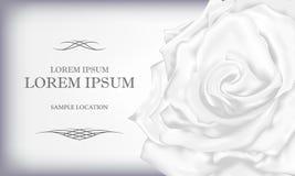 Rose blanche avec le texte à une carte ou à une invitation Vecteur Illustratio Photos stock