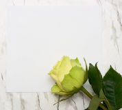 Rose on a blank leaf paper Stock Photography