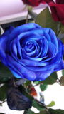 Rose bleue photographie stock