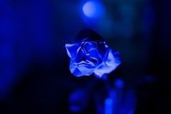 Rose bleue Image stock