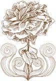 Rose Bloom Artistic illustration libre de droits