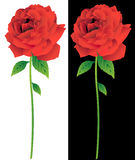 Rose Bloom Line Art. 3D image of red roses with white and black backgrounds Vector Illustration