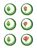 Rose blooming vector illustration