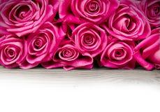 Rose blooms Stock Photo