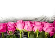 Rose blooms Stock Photos