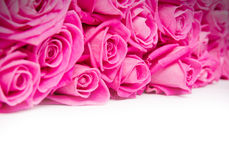 Rose blooms Royalty Free Stock Photo