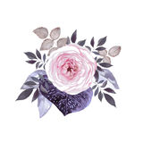 Rose blossom. Pink tea rose blossom with decorative leaves. Watercolor image Stock Images