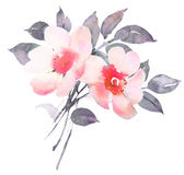 Rose in blossom watercolor illustratiion. Rose bush in blossom watercolor illustratiion Royalty Free Stock Images