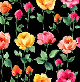 Water color painting of Rose blossoms and buds. Handpainted multicolor watercolor roses on black background  in a upright spring pattern pattern Stock Photos