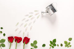 Rose blossoms and watering can Stock Photos