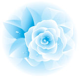 Rose blue. Vector. Stock Photography