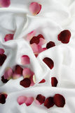 Rose-Blumenblätter stockfoto