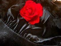 Rose, boa y satén románticos Imagenes de archivo