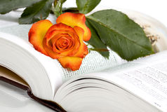 Rose and book Stock Images