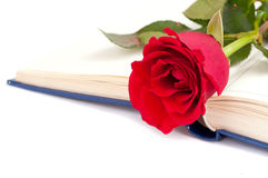 Rose and book Royalty Free Stock Image
