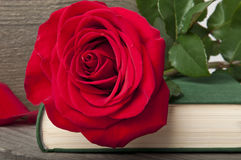 Rose on book Stock Photo
