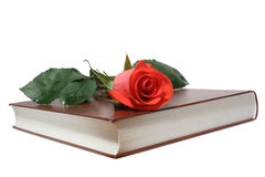 Rose on a book. Red rose on a book Royalty Free Stock Photo