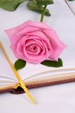 The rose on the book Stock Image