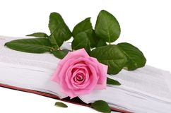 The rose on the book close-up Royalty Free Stock Photo