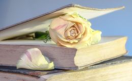 Rose, Book, Old Book, Blossom Stock Photos