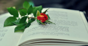 Rose on the book. Open book and red rose stock image