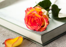 Rose on a book Stock Photography