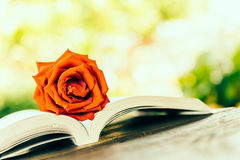 Rose on book Royalty Free Stock Photo
