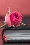 Rose&Books Stockbild