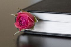 Rose&Books Stockfotografie