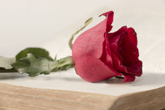Rose on books Royalty Free Stock Photo