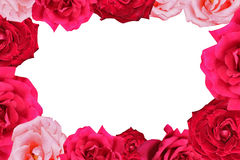 Rose border Stock Image