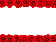 Rose border. Red rose double edged border with copy space Royalty Free Stock Photos