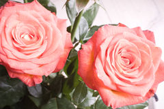 Rose bouquet Royalty Free Stock Image