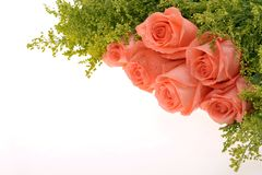 Rose bouquet. Beautiful pink flower rose In the white background Royalty Free Stock Image