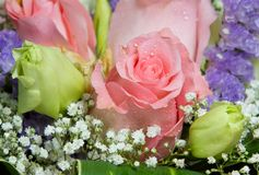 Rose Bouquet. A close up of a soft pink rose in a bouquet of green and pink roses stock photo