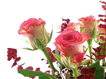 Rose bouquet. Isolated on a white background stock photography