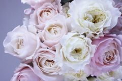 Rose bouquet Stock Image