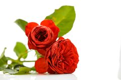 Rose Bouquet Against White Background royaltyfri bild