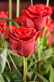 Rose bouquet close-up Stock Photography