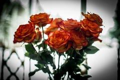 Rose bouquet stock image