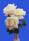 Rose bouquet isolated Royalty Free Stock Images